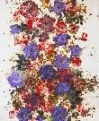 flowers-vol-11